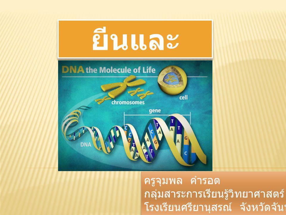 ยีนและโครโมโซม ครูจุมพล คำรอต