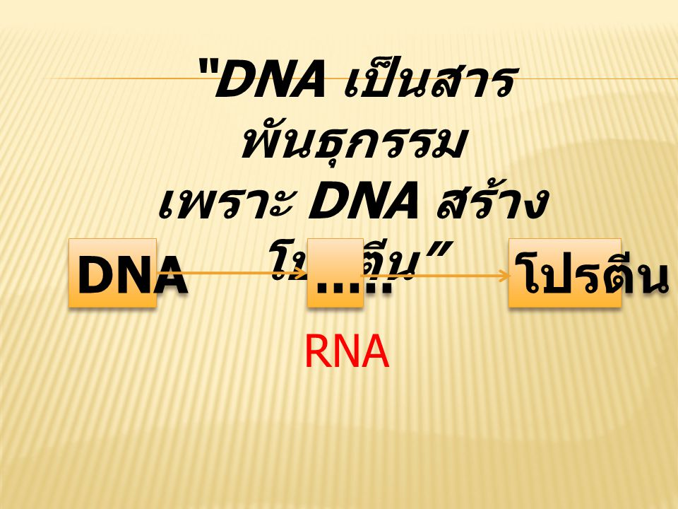 DNA เป็นสารพันธุกรรม เพราะ DNA สร้างโปรตีน