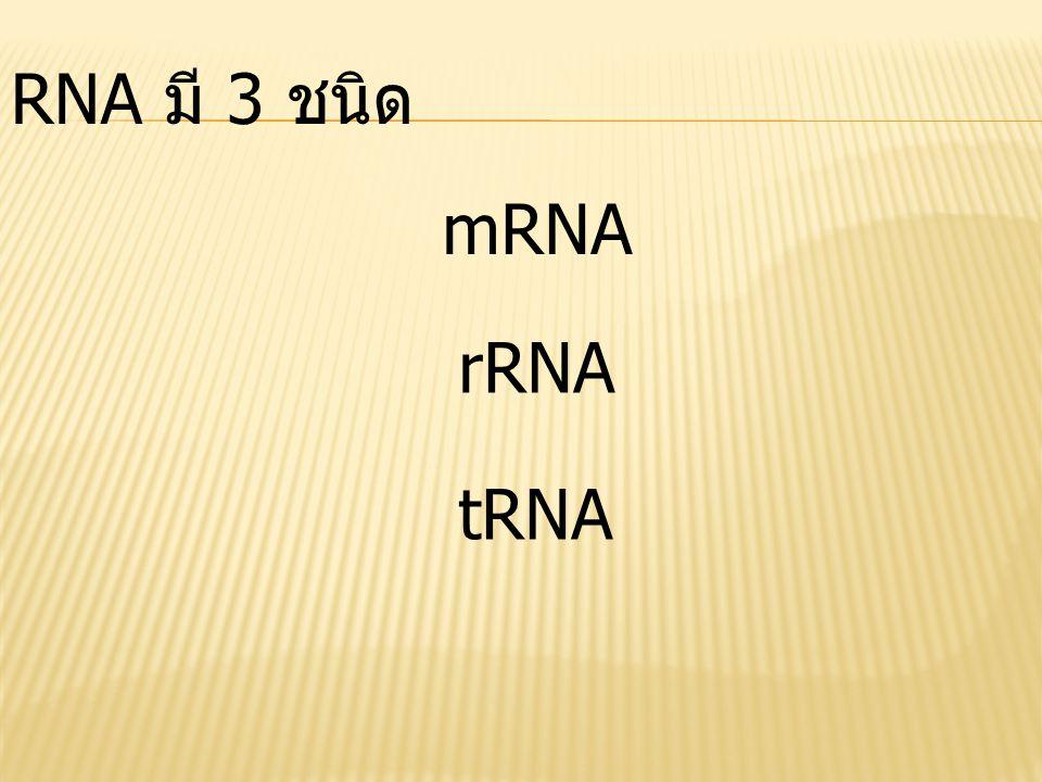 RNA มี 3 ชนิด mRNA rRNA tRNA