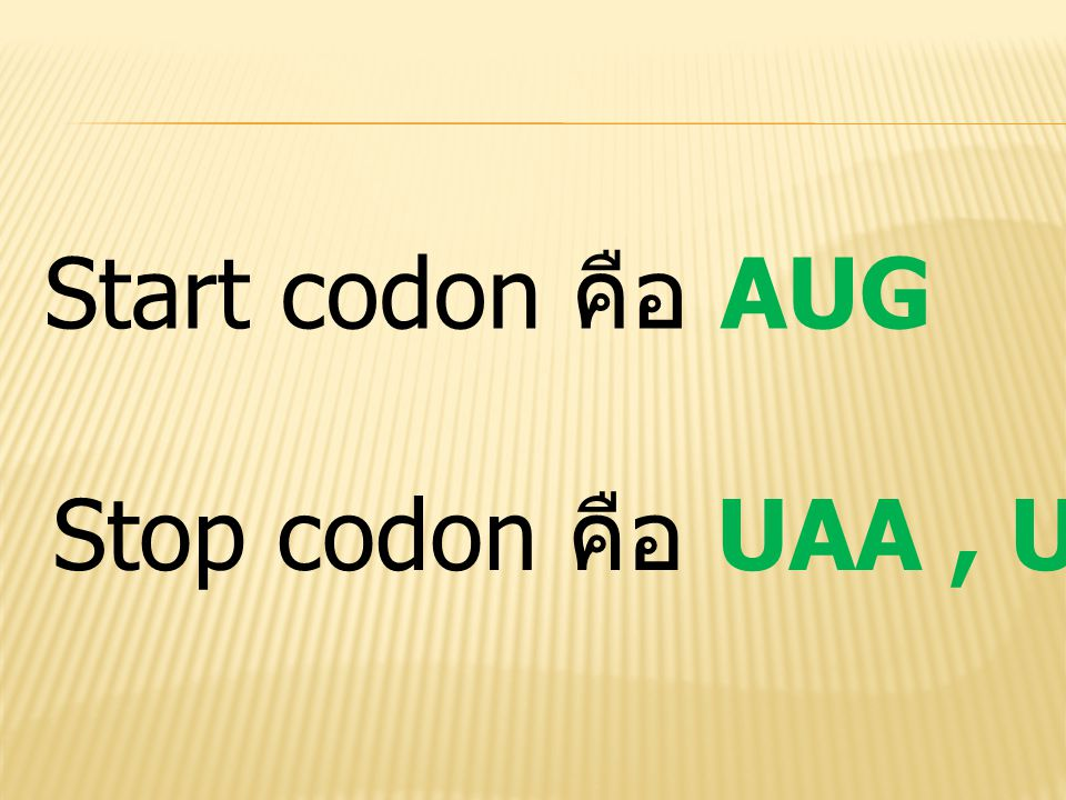 Start codon คือ AUG Stop codon คือ UAA , UAG และ UGA