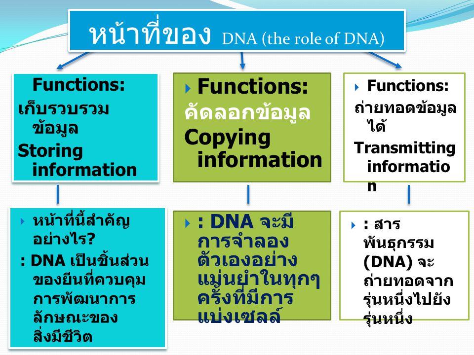 หน้าที่ของ DNA (the role of DNA)