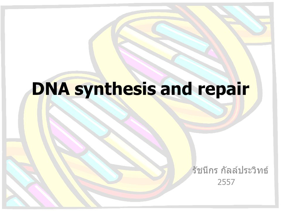 DNA synthesis and repair