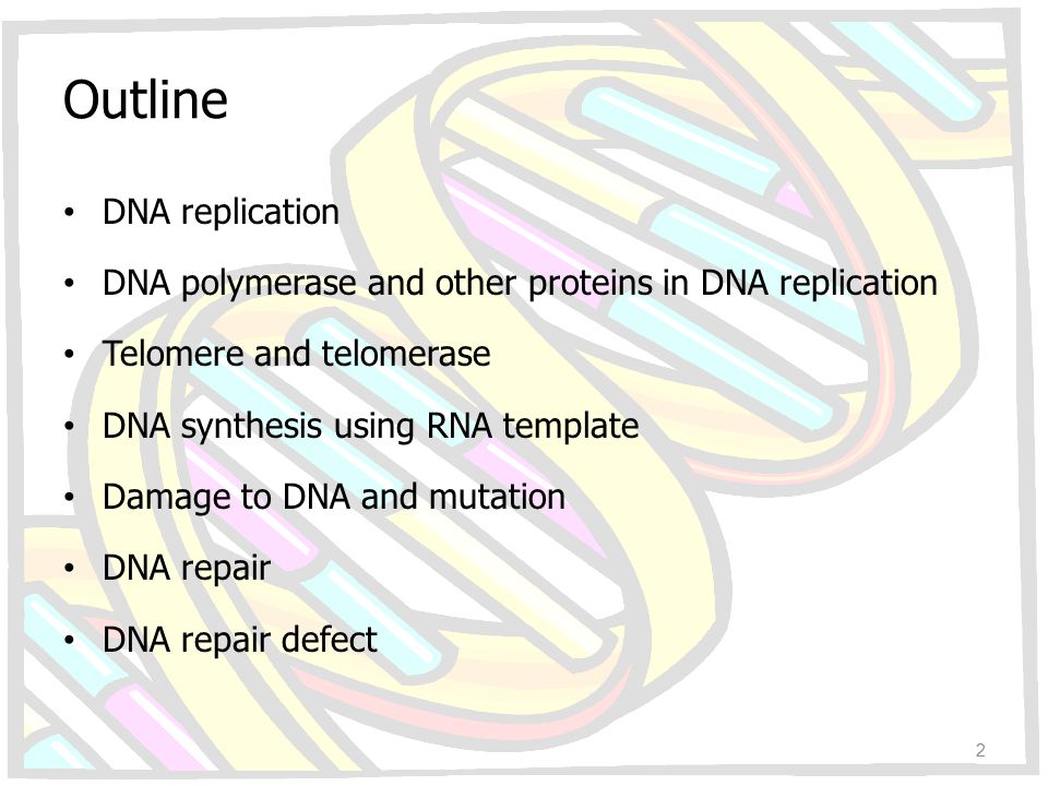 Outline DNA replication