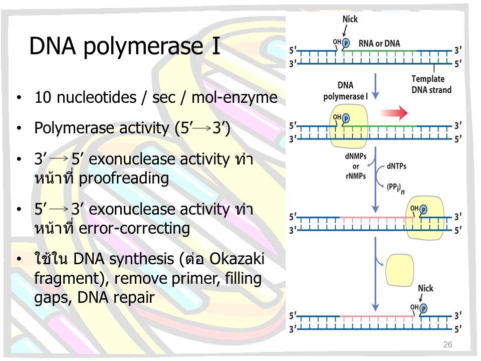 DNA polymerase I 10 nucleotides / sec / mol-enzyme