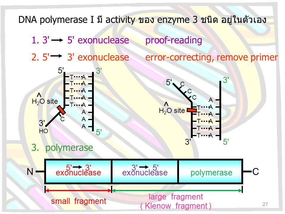 DNA polymerase I มี activity ของ enzyme 3 ชนิด อยู่ในตัวเอง