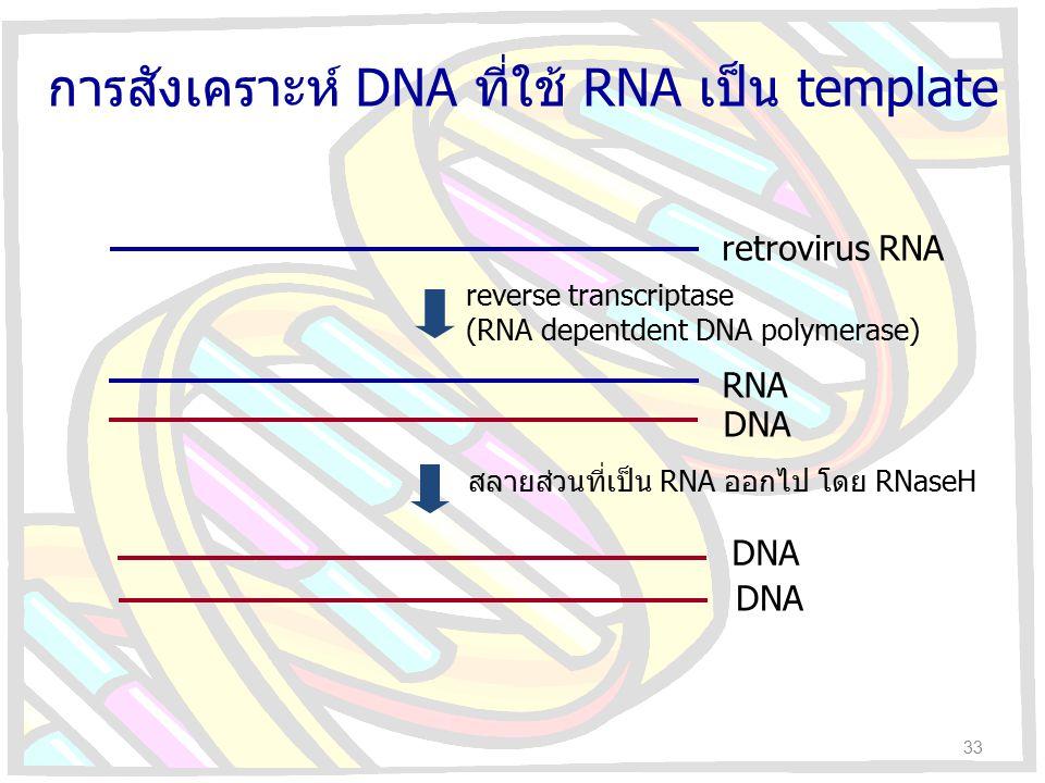 การสังเคราะห์ DNA ที่ใช้ RNA เป็น template