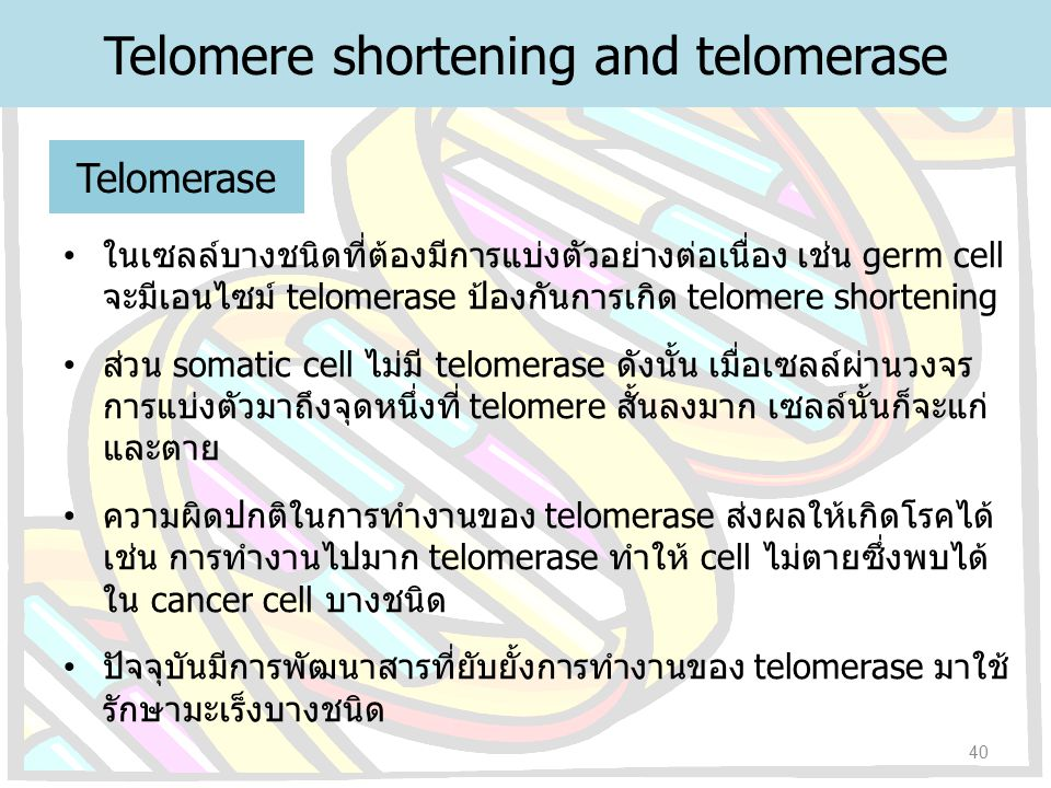 Telomere shortening and telomerase