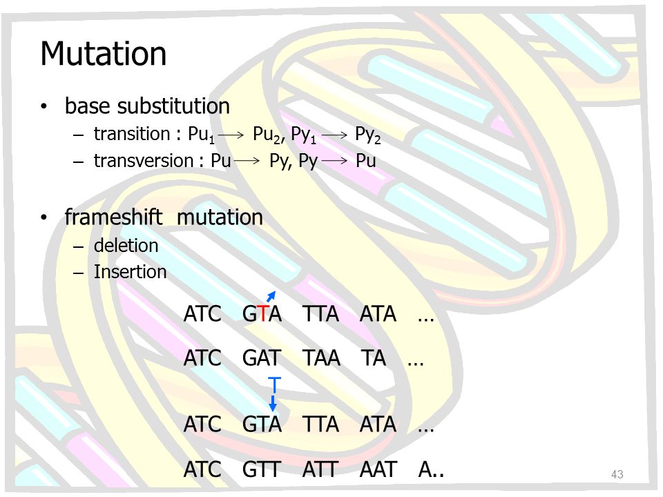 Mutation base substitution frameshift mutation ATC GAT TAA TA … T