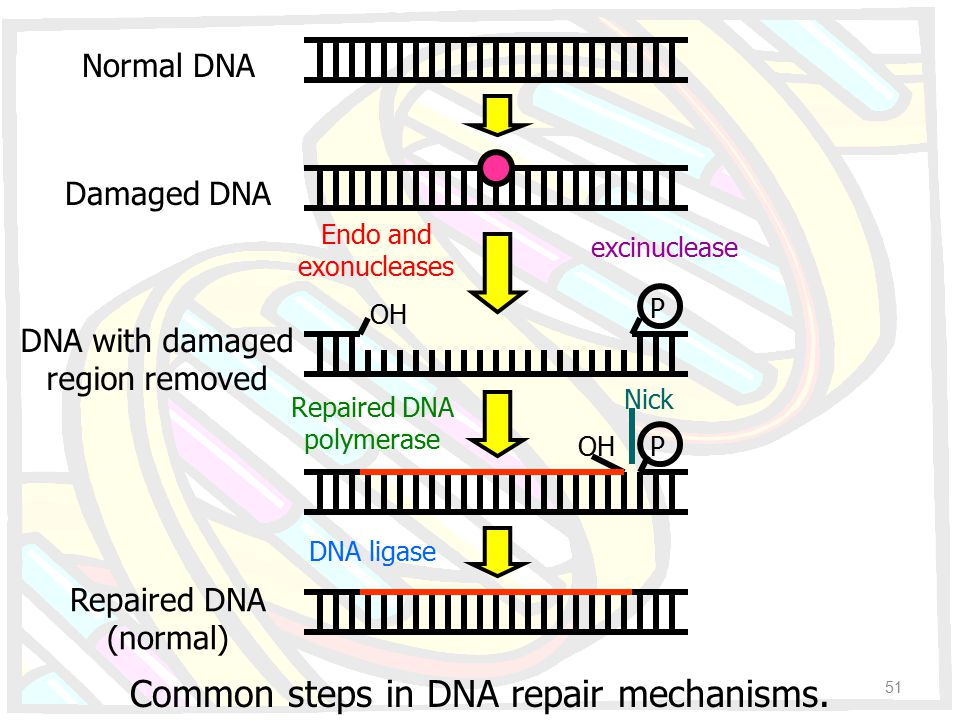 Common steps in DNA repair mechanisms.