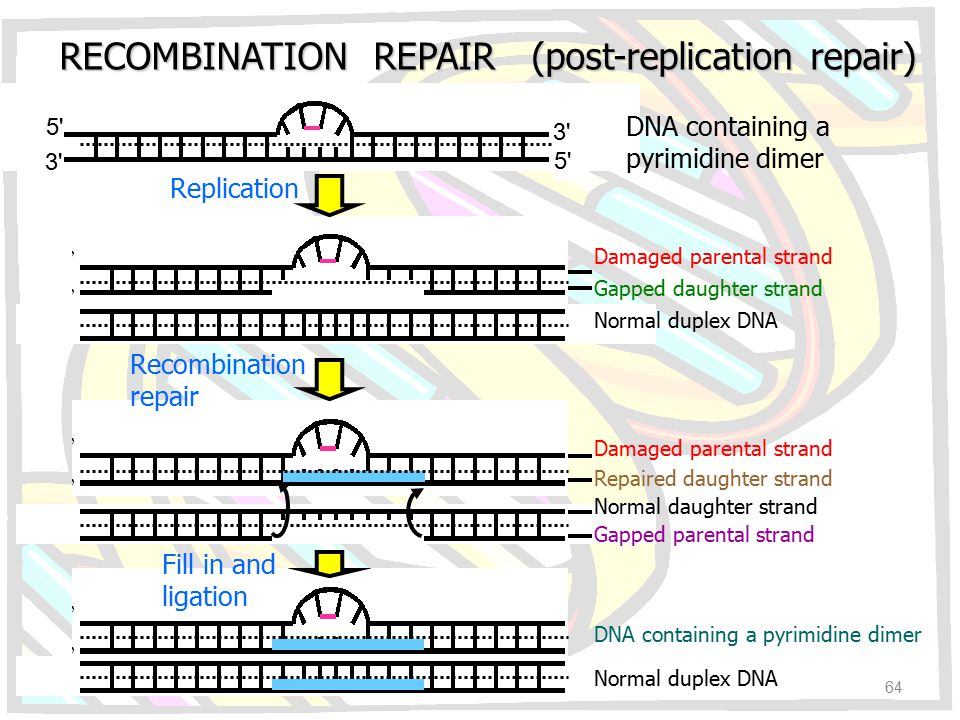 RECOMBINATION REPAIR (post-replication repair)