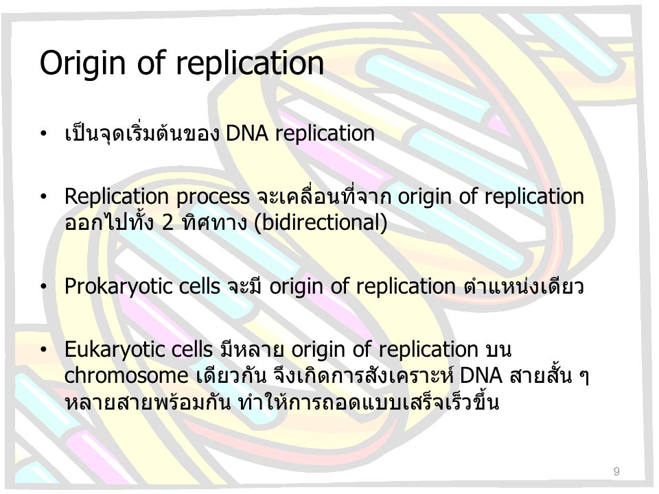 Origin of replication เป็นจุดเริ่มต้นของ DNA replication