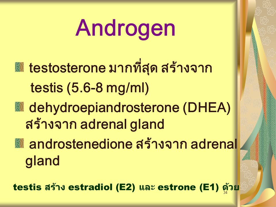 Androgen testosterone มากที่สุด สร้างจาก testis (5.6-8 mg/ml)