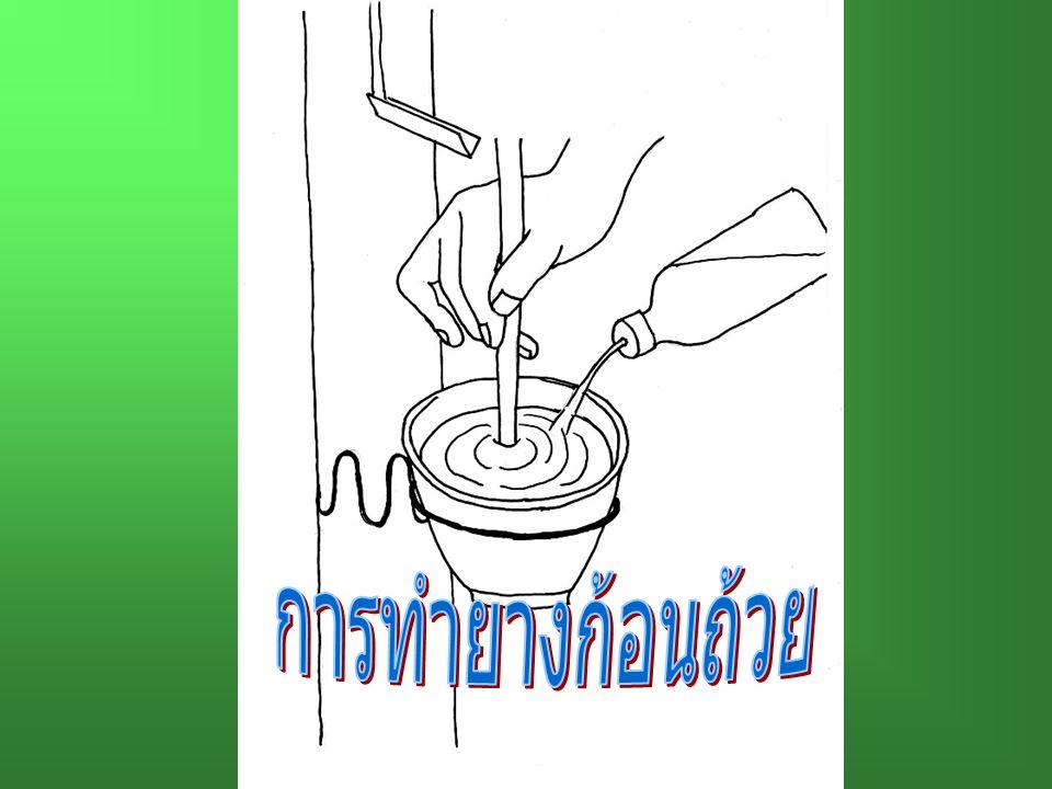การทำยางก้อนถ้วย
