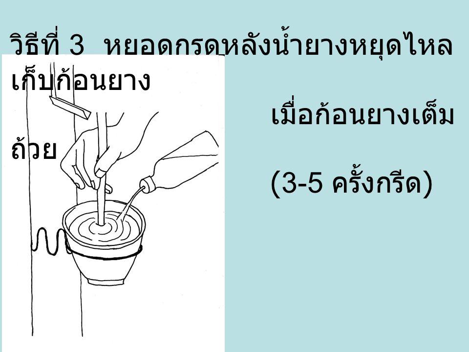 วิธีที่ 3 หยอดกรดหลังน้ำยางหยุดไหล เก็บก้อนยาง