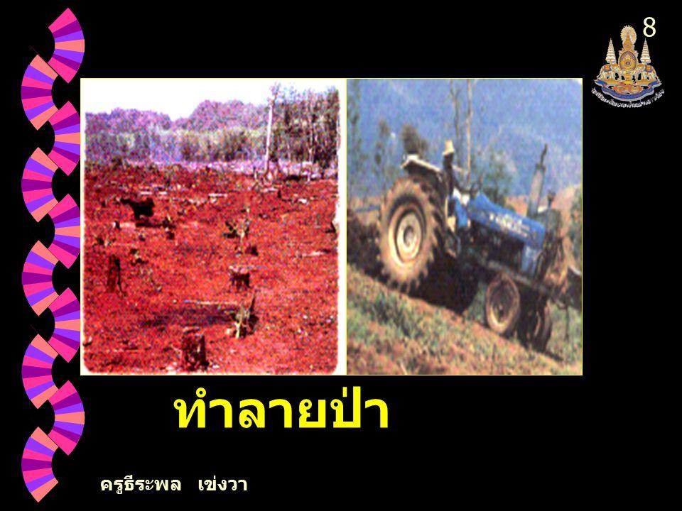 8 2. การตัดไม้ทำลายป่า ครูธีระพล เข่งวา