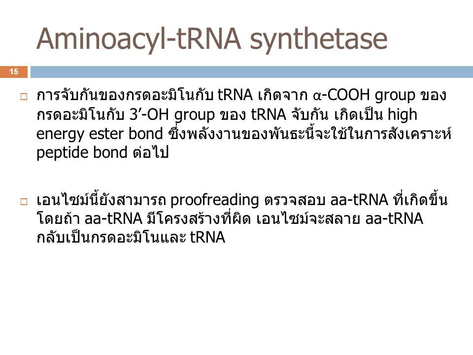Aminoacyl-tRNA synthetase