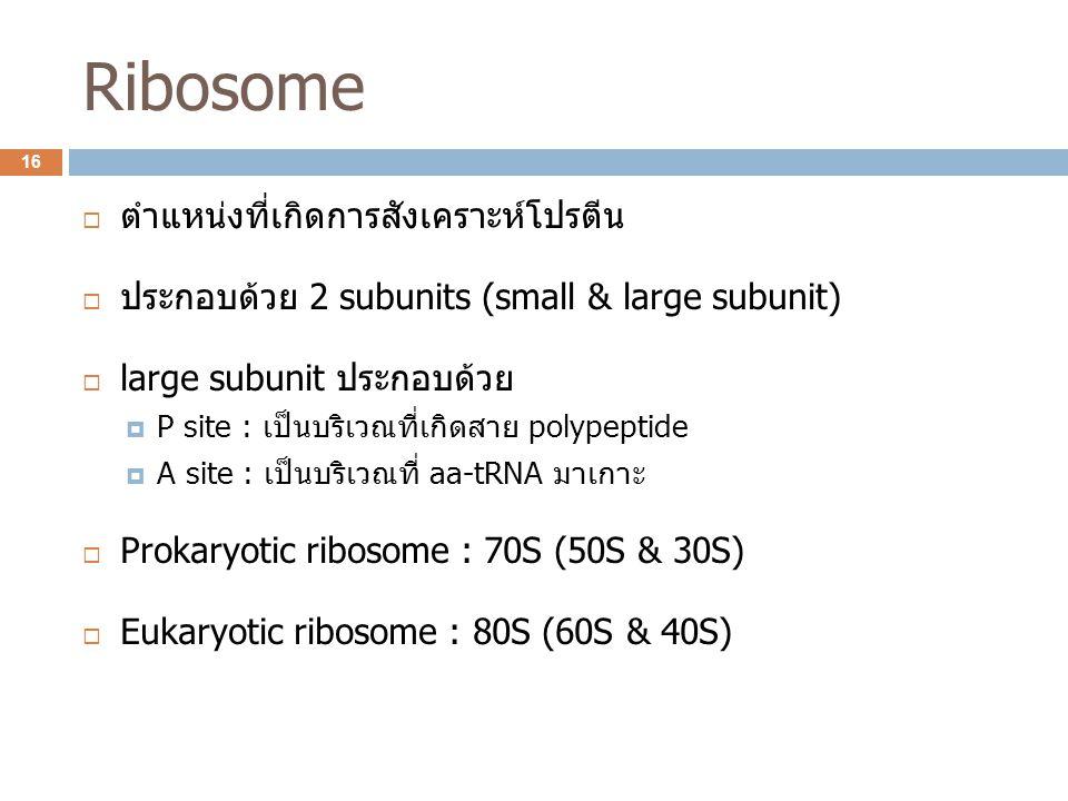 Ribosome ตำแหน่งที่เกิดการสังเคราะห์โปรตีน