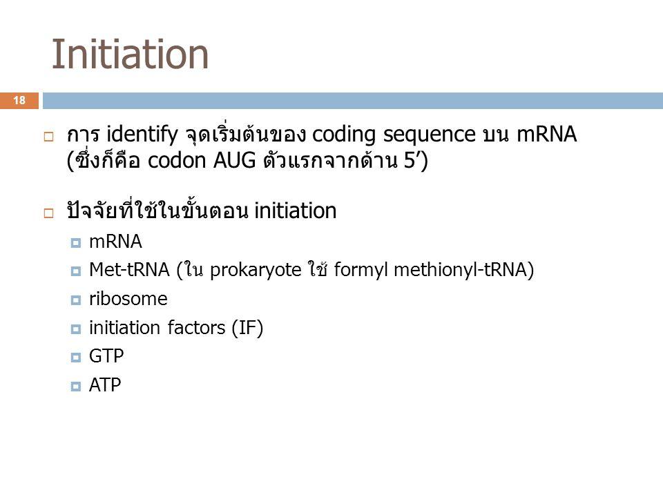Initiation การ identify จุดเริ่มต้นของ coding sequence บน mRNA (ซึ่งก็คือ codon AUG ตัวแรกจากด้าน 5')