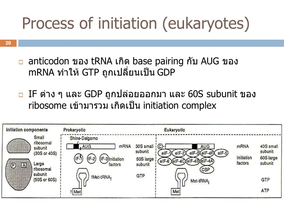Process of initiation (eukaryotes)