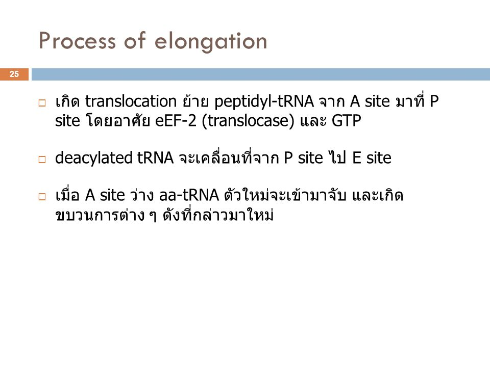 Process of elongation เกิด translocation ย้าย peptidyl-tRNA จาก A site มาที่ P site โดยอาศัย eEF-2 (translocase) และ GTP.