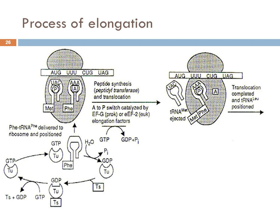 Process of elongation