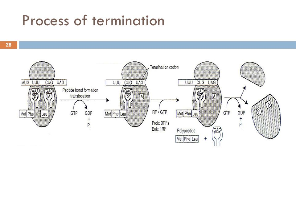 Process of termination