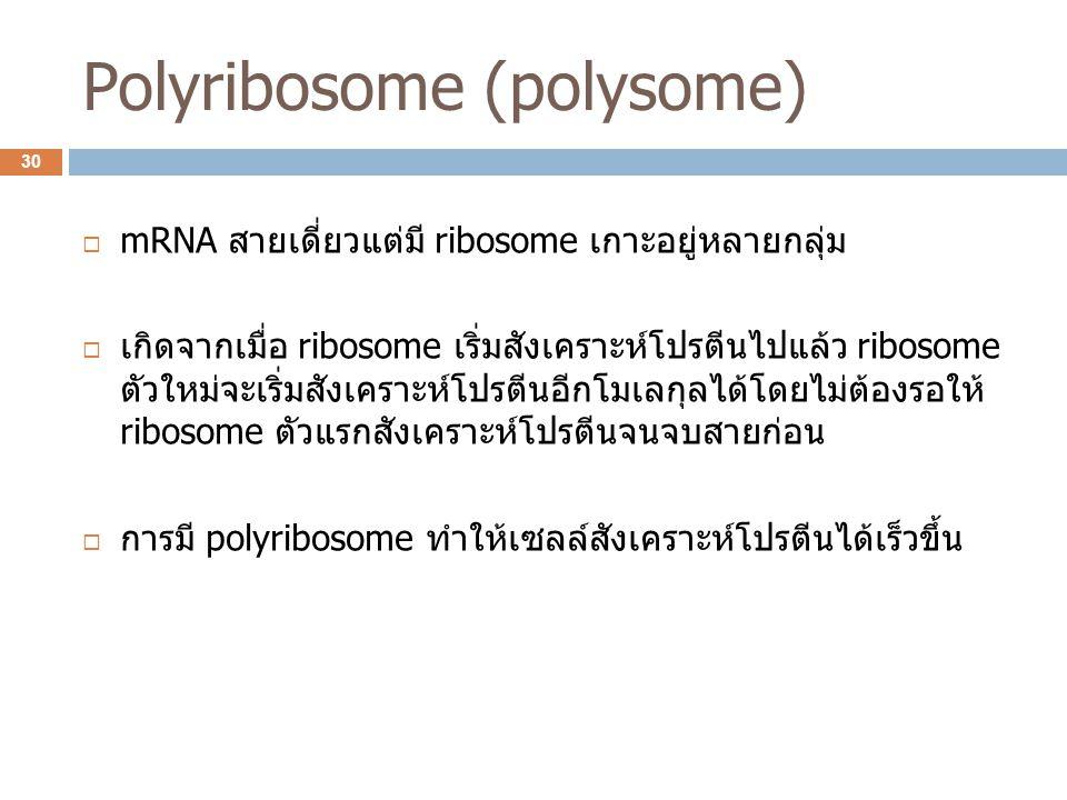 Polyribosome (polysome)