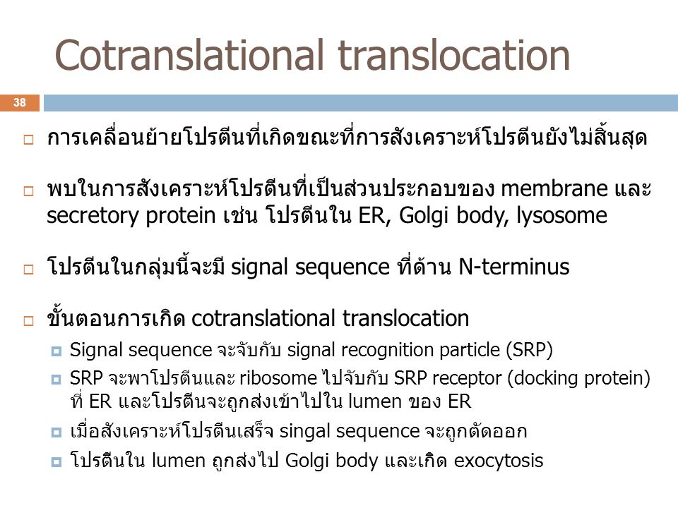Cotranslational translocation
