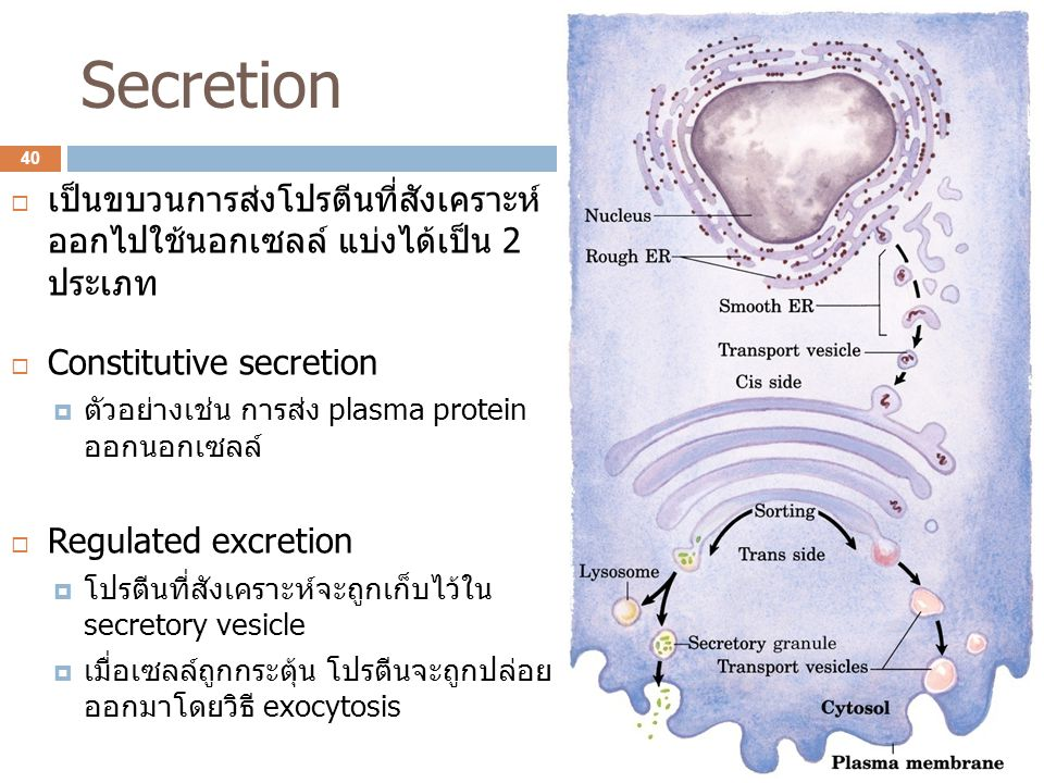 Secretion เป็นขบวนการส่งโปรตีนที่สังเคราะห์ ออกไปใช้นอกเซลล์ แบ่งได้เป็น 2 ประเภท. Constitutive secretion.