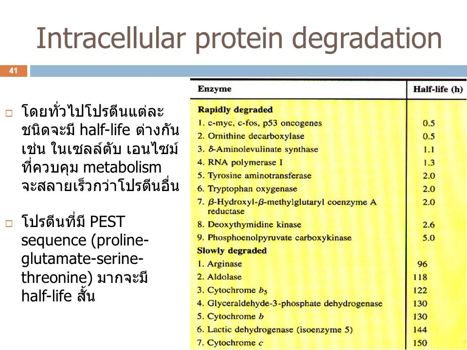 Intracellular protein degradation