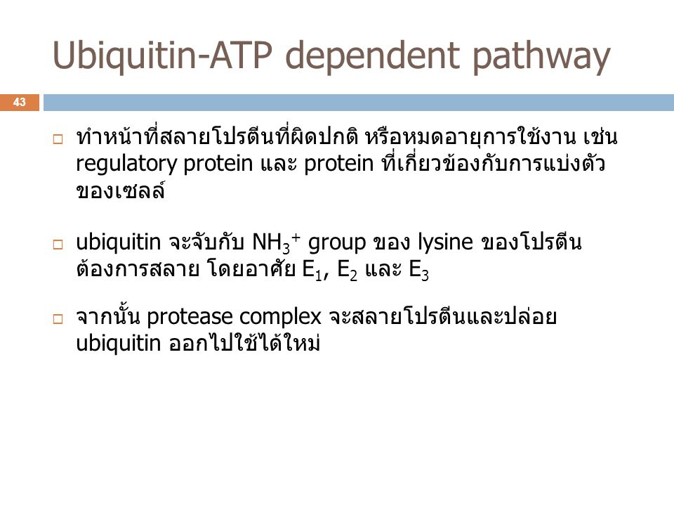 Ubiquitin-ATP dependent pathway