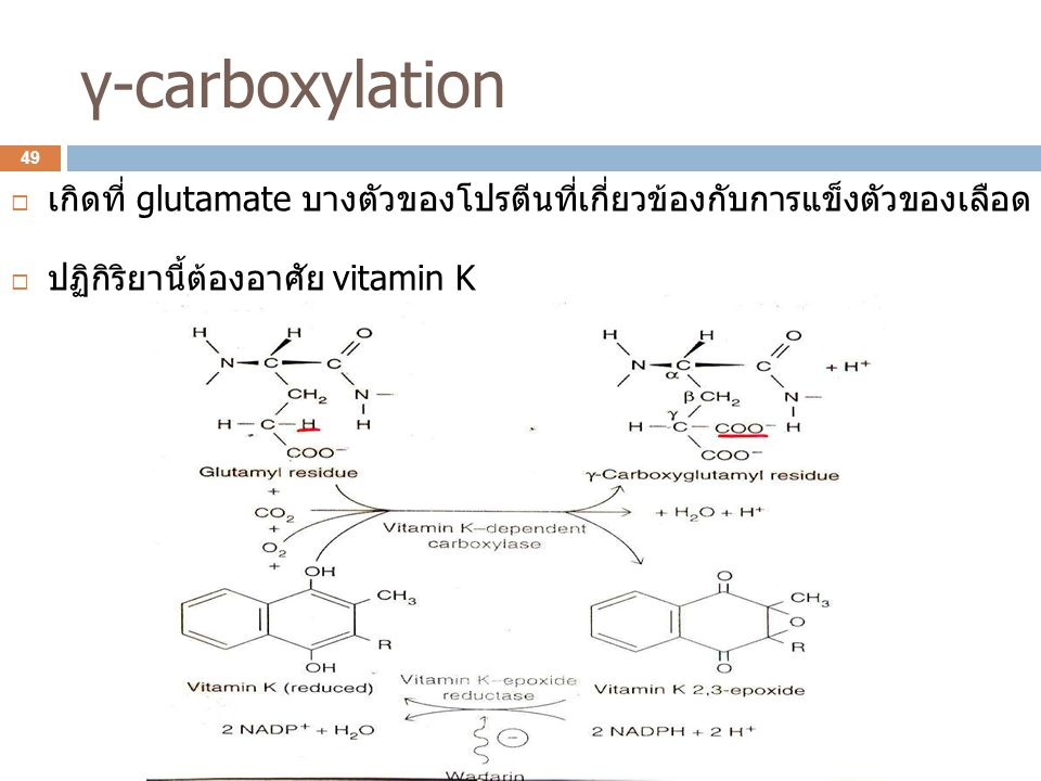 γ-carboxylation เกิดที่ glutamate บางตัวของโปรตีนที่เกี่ยวข้องกับการแข็งตัวของเลือด.