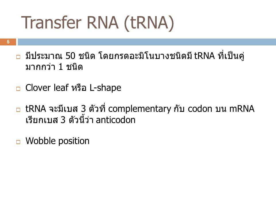 Transfer RNA (tRNA) มีประมาณ 50 ชนิด โดยกรดอะมิโนบางชนิดมี tRNA ที่เป็นคู่ มากกว่า 1 ชนิด. Clover leaf หรือ L-shape.