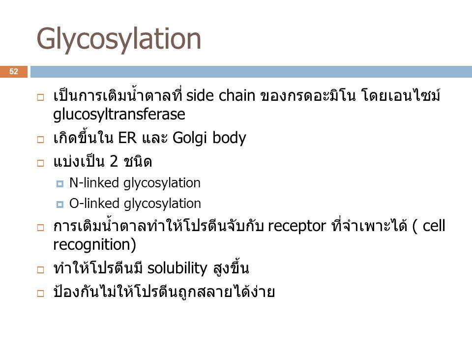 Glycosylation เป็นการเติมน้ำตาลที่ side chain ของกรดอะมิโน โดยเอนไซม์ glucosyltransferase. เกิดขึ้นใน ER และ Golgi body.