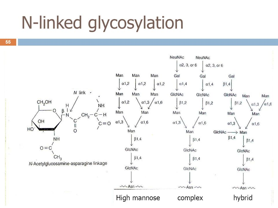 N-linked glycosylation