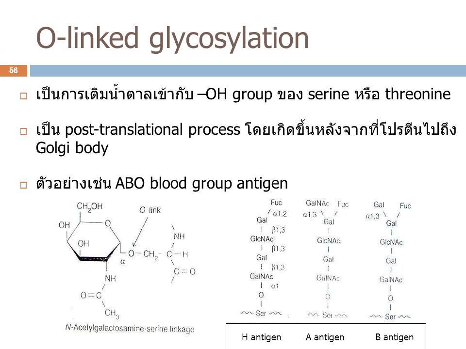 O-linked glycosylation
