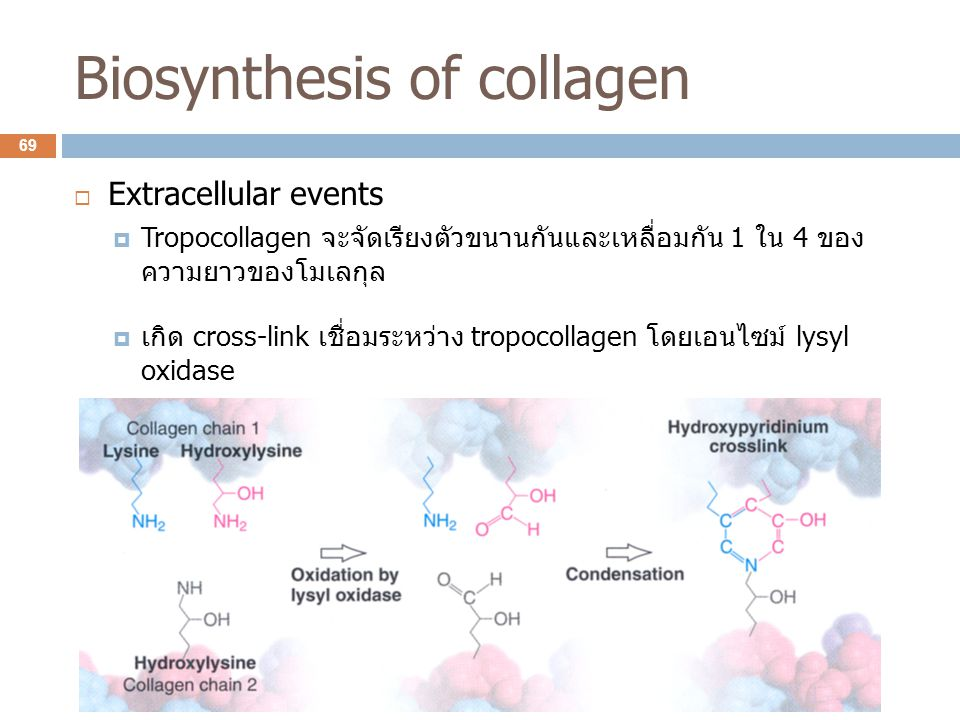 Biosynthesis of collagen