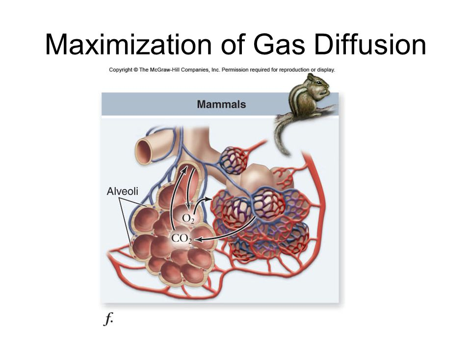 Maximization of Gas Diffusion