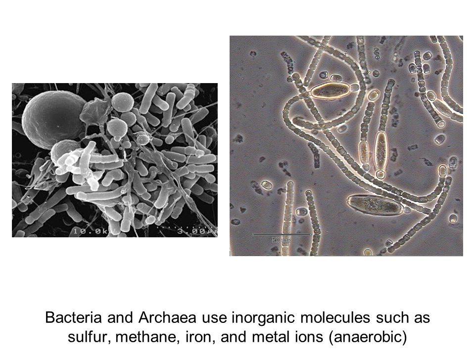 Bacteria and Archaea use inorganic molecules such as sulfur, methane, iron, and metal ions (anaerobic)