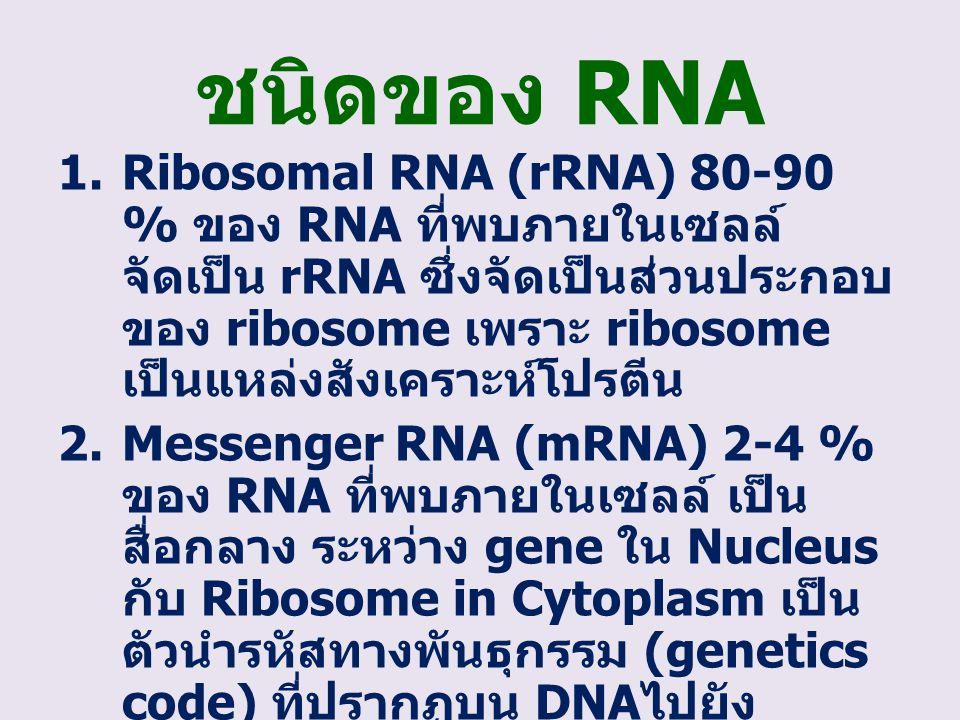 ชนิดของ RNA