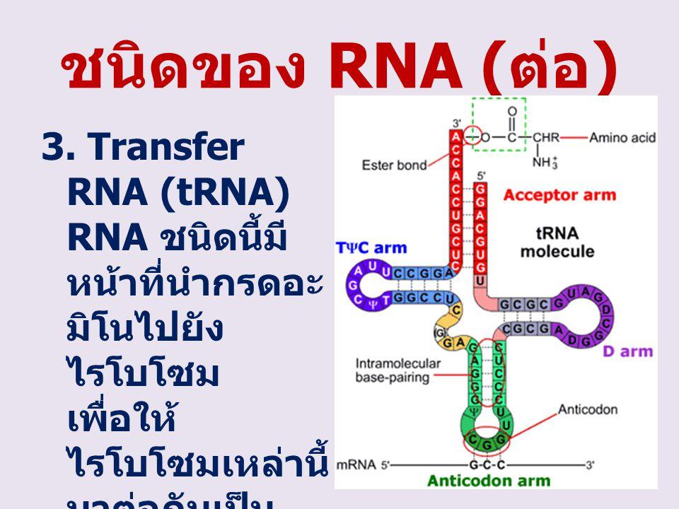 ชนิดของ RNA (ต่อ) 3.