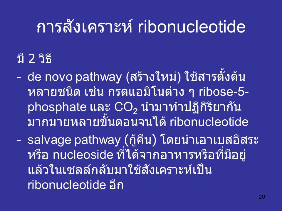 การสังเคราะห์ ribonucleotide