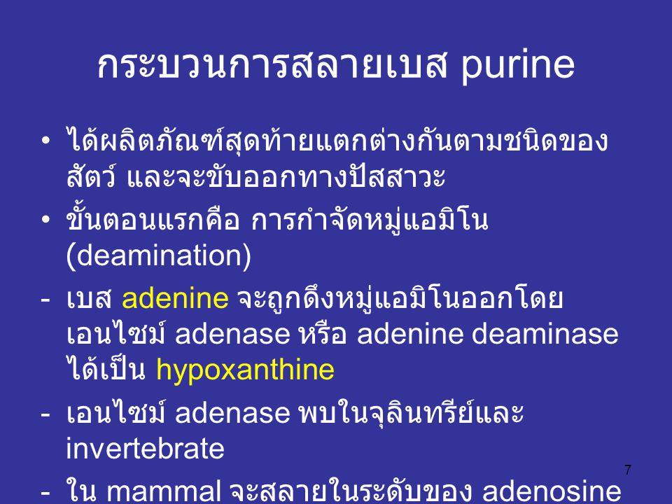 กระบวนการสลายเบส purine