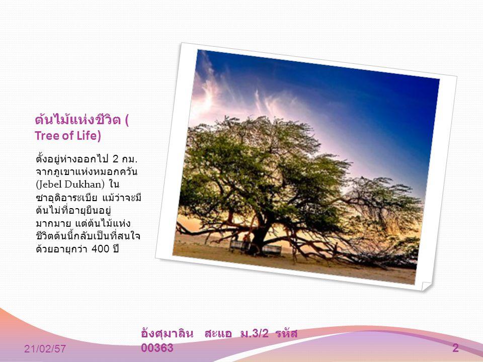 ต้นไม้แห่งชีวิต ( Tree of Life)