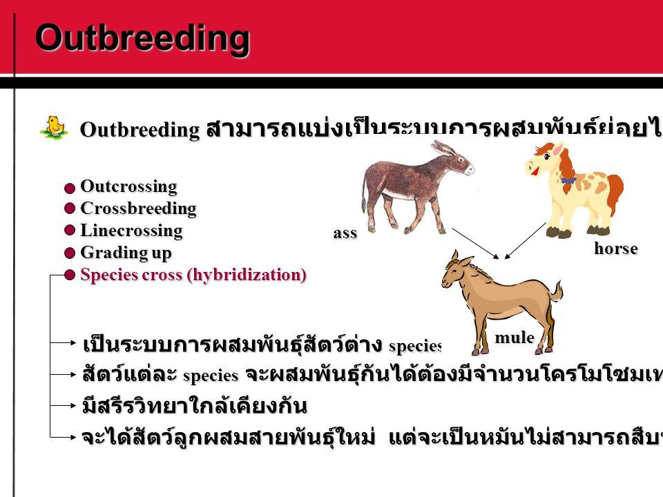Outbreeding Outbreeding สามารถแบ่งเป็นระบบการผสมพันธุ์ย่อยได้ดังนี้