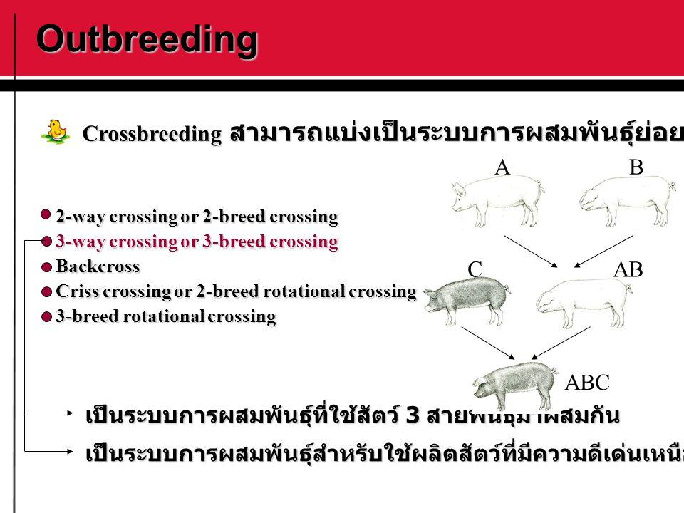 Outbreeding Crossbreeding สามารถแบ่งเป็นระบบการผสมพันธุ์ย่อยได้ดังนี้