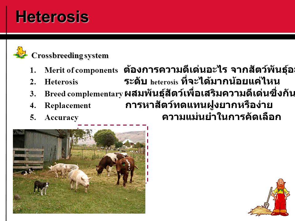 Heterosis Crossbreeding system