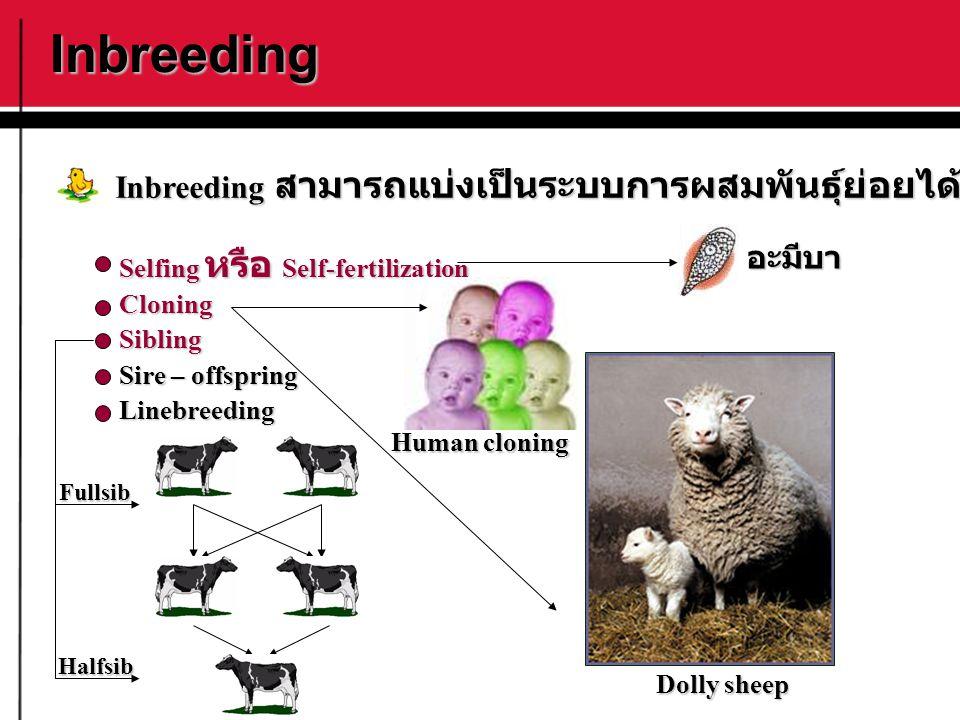 Inbreeding Inbreeding สามารถแบ่งเป็นระบบการผสมพันธุ์ย่อยได้ดังนี้