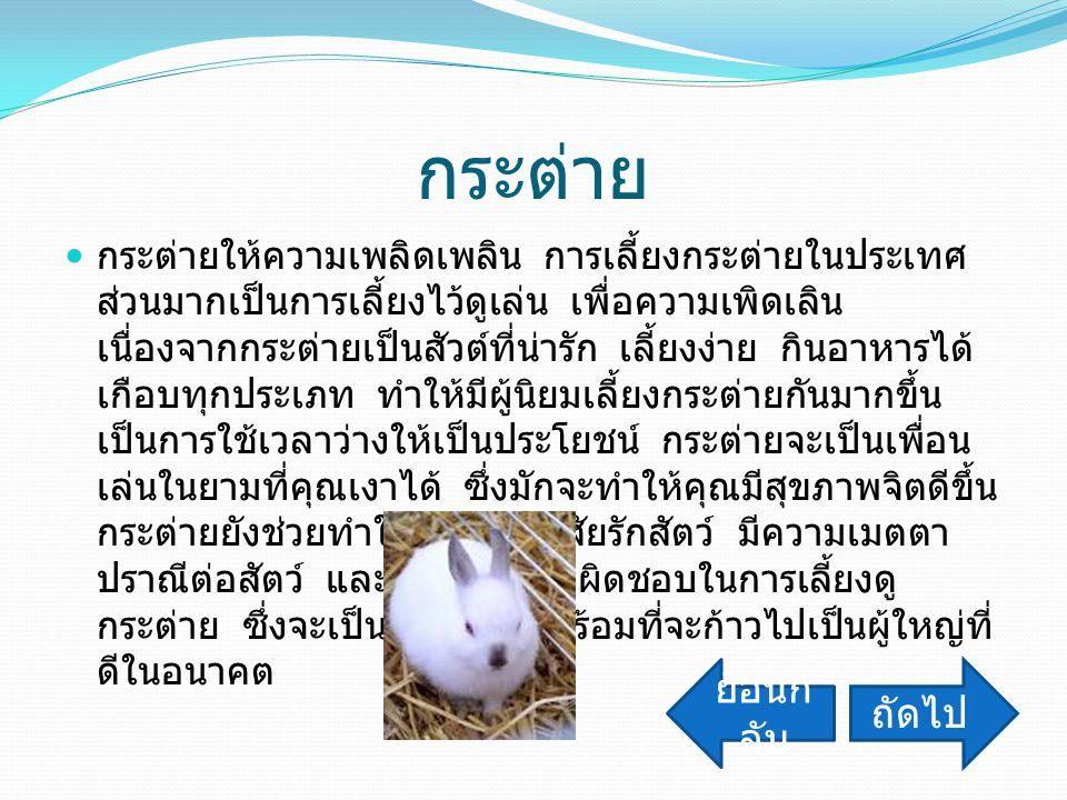 กระต่าย ย้อนกลับ ถัดไป