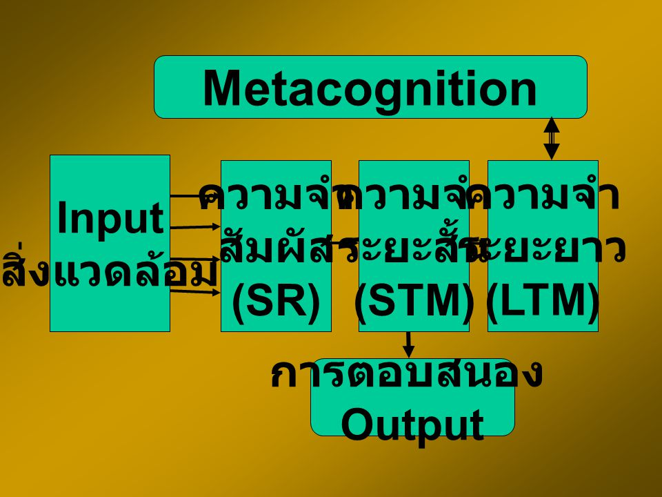 Metacognition Input สิ่งแวดล้อม ความจำ สัมผัส (SR) ความจำ ระยะสั้น